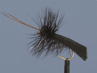 Black Sedge