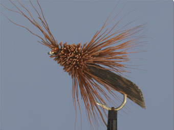Deer Brown Sedge