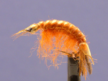 Orange Hair Shrimp